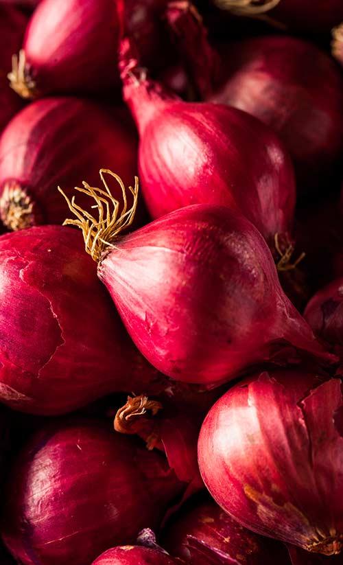onion2_0